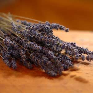 lavendl-klein